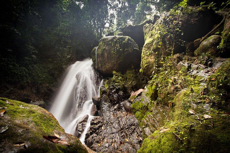 Verwonderend Tropisch Regenwoud van Sumatra   Unesco Commissie DS-71