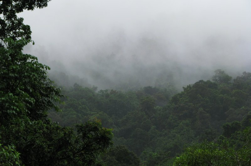 Cloud-wreathed rainforest ascending up the side of Mossman Gorge. (Foto: CC/Flickr.com | tanetahi)