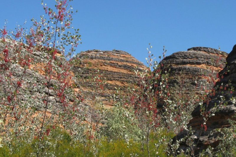 Domes and Wickham's Grevillea in Purnululu . (Foto: CC/Flickr.com | minerva95aus)