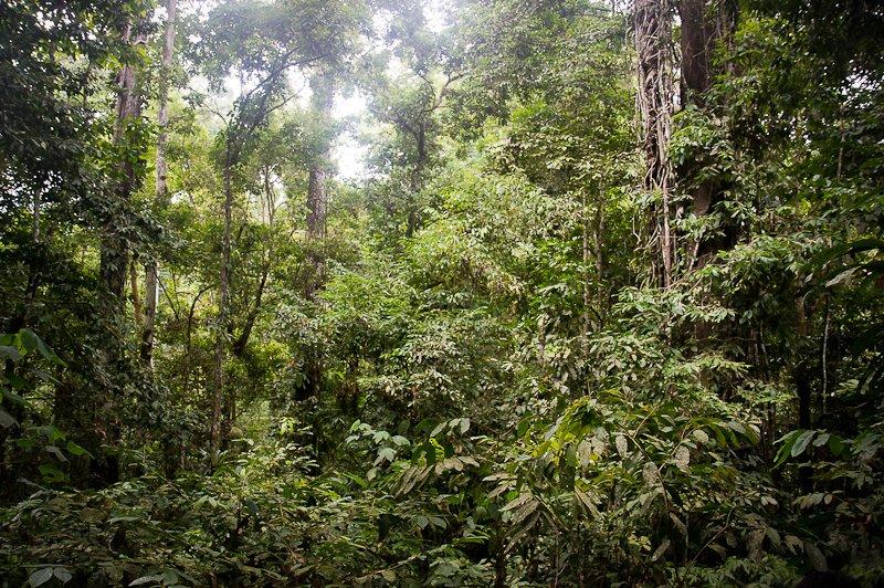 Tropisch Regenwoud Van Sumatra Unesco Commissie