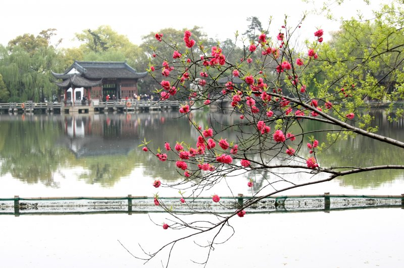 Peach Blossom and a pavilion on the island on West Lake Hangzhou. (Foto: CC/Flickr.com | Anne Roberts)