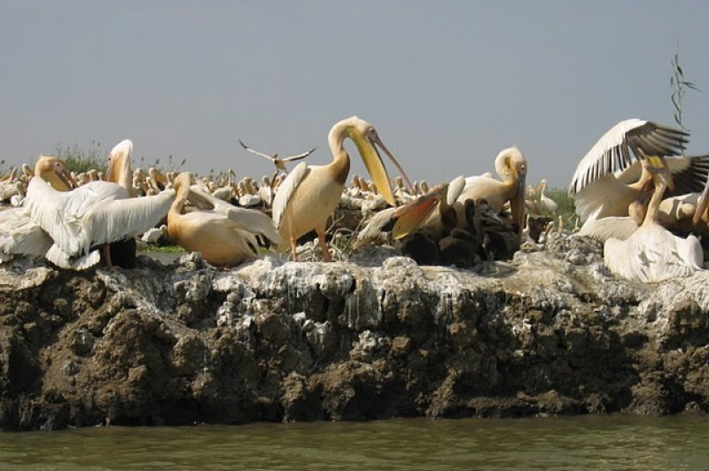 Pelican Birds in Djoudj Park - Saint Louis, Senegal. (Foto: CC/Flickr.com | ...your local connection)