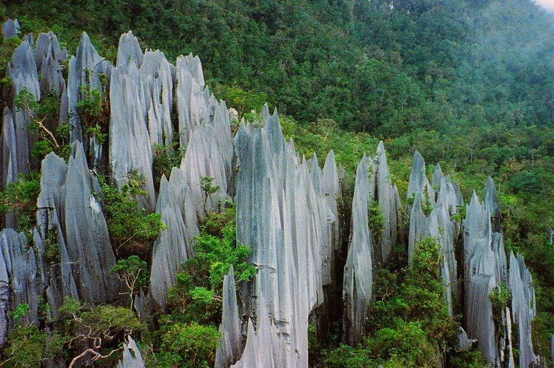 Pinnacles at Mulu, Gunung Mulu National Park, Borneo. (Foto: CC/Flickr.com | Paul White)