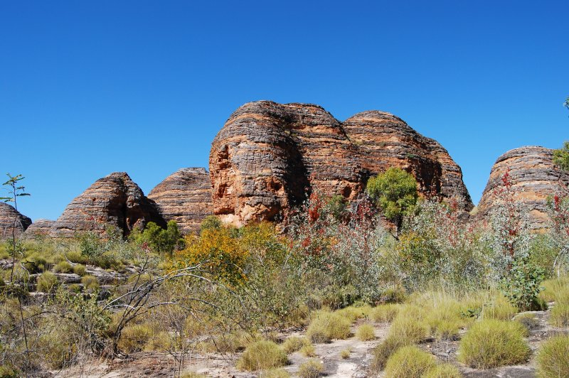 Spinifex, wattles and grevilleas Bungle Bungles. (Foto: CC/Flickr.com | Natalie Tapson)