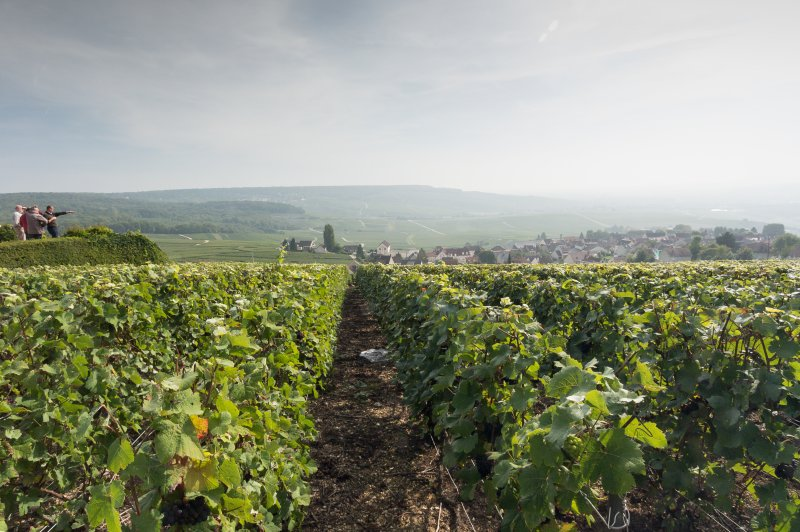 The Champagne Vinyards of Hautvillers. (Foto: CC/Flickr.com | George Bayliss)